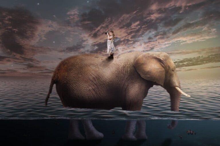 bambina; elefante; astratta;