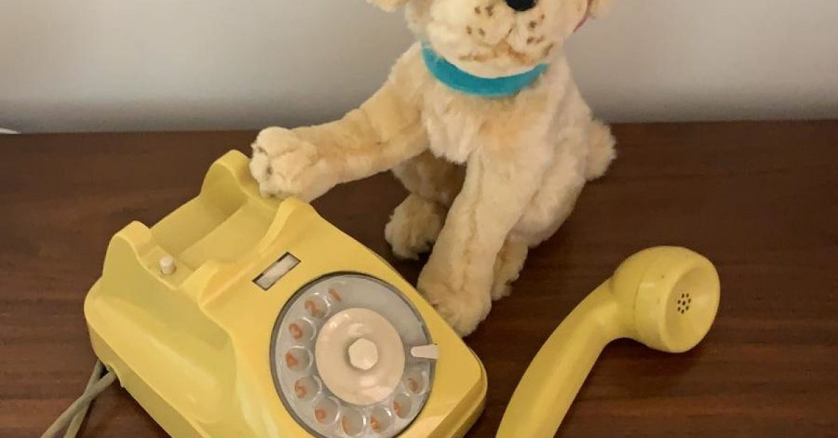 Canino; telefono;